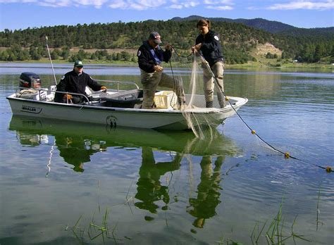 and fish nm fisheries management new mexico department of fish