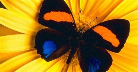 farfalla su fiore copertine farfalla su fiore