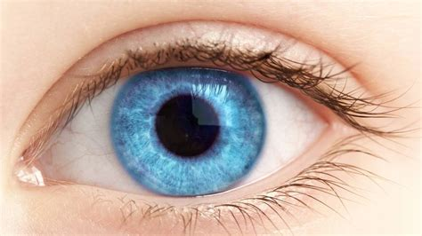 imagenes de ojos normales das menschliche auge und deren erkrankungen