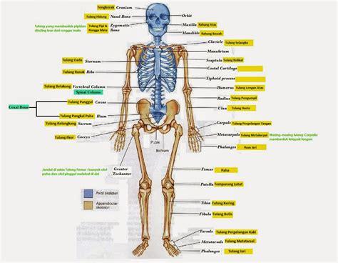 materi pp 2 anatomi dan faal dasar pmr spensaga