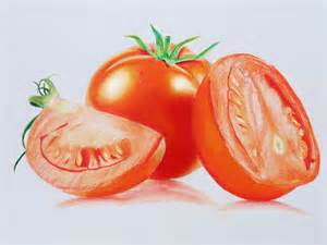 tomato speed drawing prismacolor pencils youtube