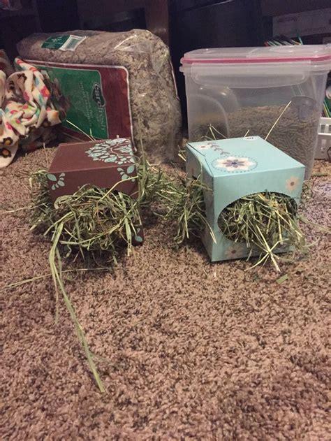 guinea pig bedding ideas best 25 guinea pig bedding ideas on pinterest pig ideas