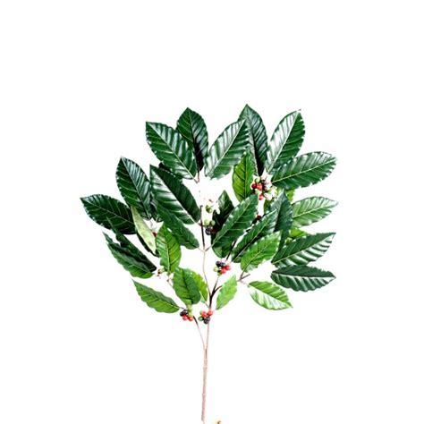 Plante Verte D Intã Rieur Pas Cher Plante Verte D Int 233 Rieur Pas Cher Fleurs Plantes