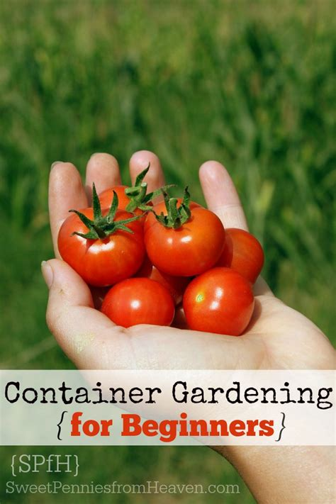 Vegetable Container Gardening For Beginners Container Gardening Archives Sweet Pennies From Heaven
