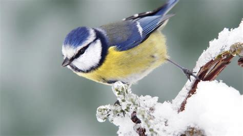 quiz which garden bird are you cbbc bbc