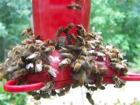 keeping bees out of the hummingbird feeder thriftyfun