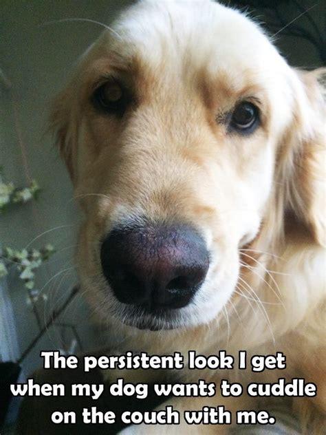 golden retriever quotes 590 best images about golden retriever quotes on gifts for dogs the