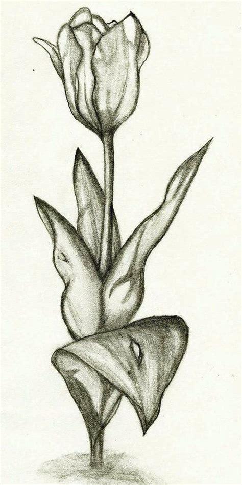 sketsa gambar bunga tulip  unik resep  dicoba