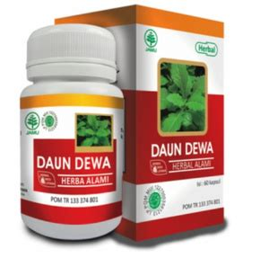 Obat Herbal Obat Herbal Hiu Daun Sirsak Obat Kanker Tumor Aa126 herba daun dewa hiu obat herbal anti kanker berkah baitul herbal