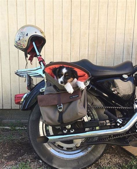 yorkie on motorcycle 96 best images about biker dogs on bikes yorkie and harley motorcycles