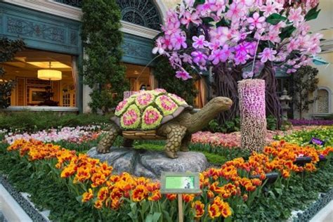 bellagio flower garden japanese culture honored in bellagio conservatory