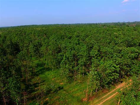 meegaswewa plantation sadaharitha