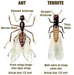 Termites House Baby