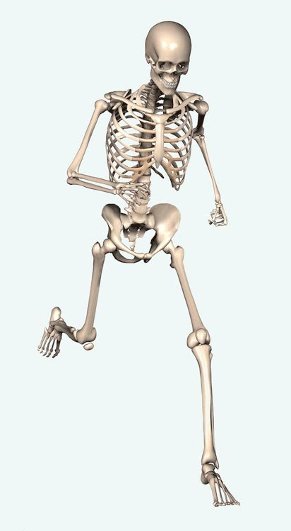 Skeleton Rantai Black 1 skeleton gif on