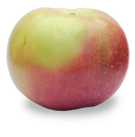apple to apple mcintosh apples cj s market