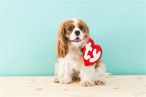 really baby puppies pets beanie baby really awesome costumes