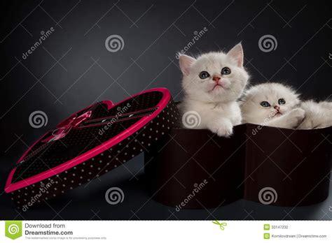white pussy cat cats persian cats stock photography cartoondealer com