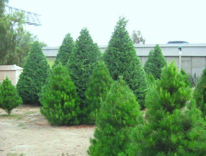 where to cut your own christmas tree 171 cbs los angeles