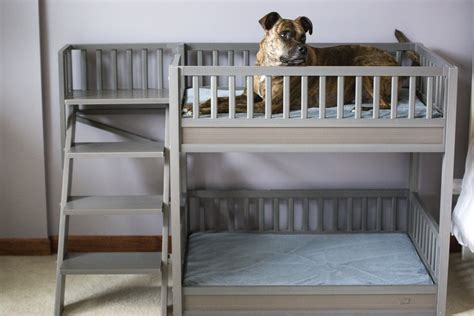 dog bunk bed ecoflex aspen pet bunk bed new age pet the best for
