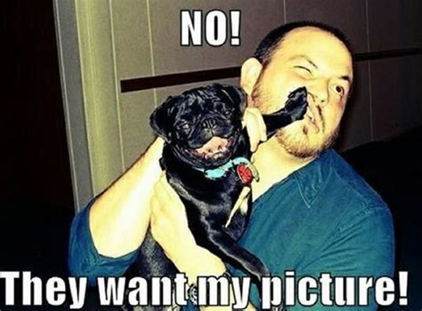 why are pugs called pugs lol so true for a laugh pug animal and