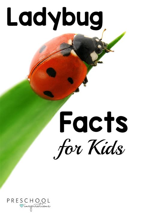 how to find ladybugs in your backyard ladybug facts for kids preschool inspirations