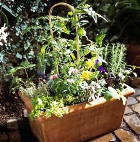 edible container garden edible container garden midwest living