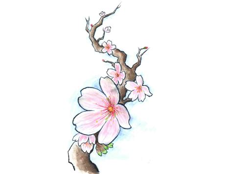 cherry blossom branch tattoo designs cherry blossom branch pencil and in color