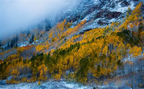 mountains  snow birch forest  yellow leaves
