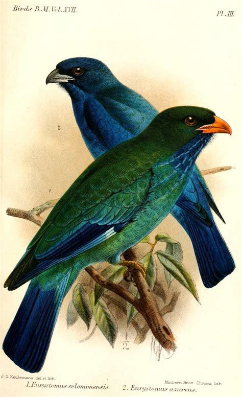 Burung Tengkek Buto tengkek buto kaskus