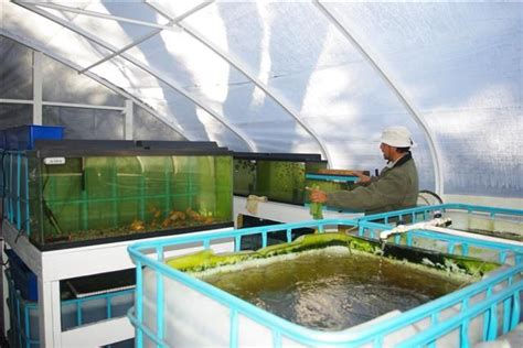 Small Home Tilapia Farm 12 Best Images About Aquaponics On