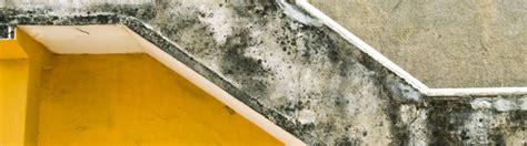 muffa pareti interne prodotti antimuffa pareti trendy colori pareti interne