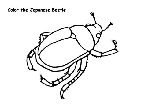 japanese beetle coloring page beetle free colouring pages