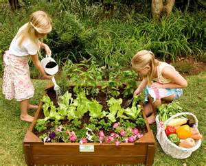 how to grow your own vegetables with room to grow