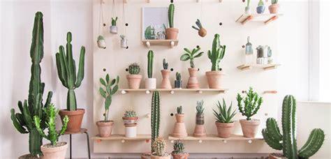 decorar el hogar con cactus