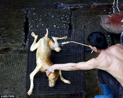 Butcher Build by A Puppy At China S Yulin Festival Unaware It Is About To