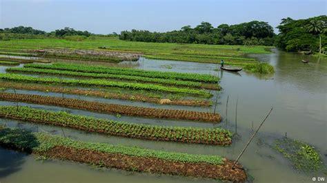 Floating Vegetable Garden Bangladesh Builds Floating Gardens To Fight Climate Change