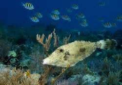 Sleepsuit Blue Stripe Octopus Turn Me Around diving america s undersea park