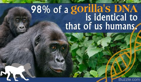 Facts About Gorillas That are Totally Dumbfounding