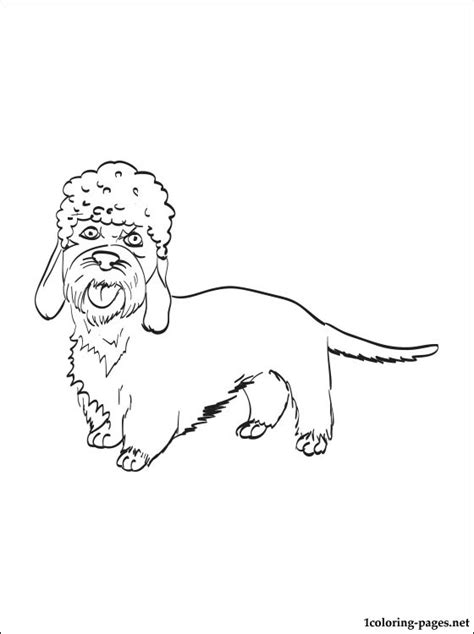 coloring pages of breeds dandie dinmont terrier coloring page coloring pages