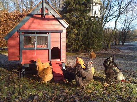 hen house hen house home