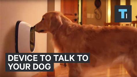 how to talk to dogs device to talk to your
