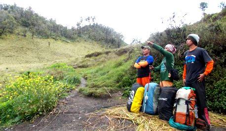 Kirinyuh Eupatorium Inulifolium Kunth gunung butak survival