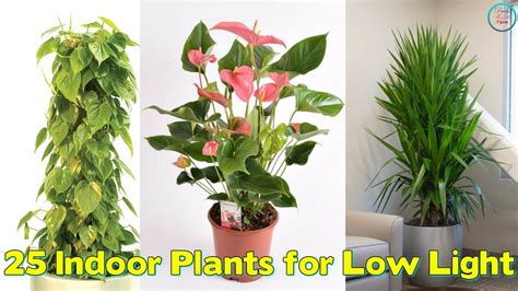 plants for low light 25 indoor plants for low light youtube