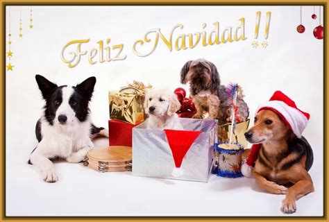 Imagenes Feliz Navidad Con Perros | las mejores fotos de perritos en navidad imagenes de