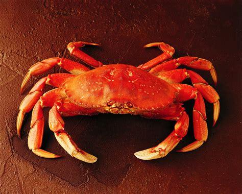 Crab Photos crab pictures images photos