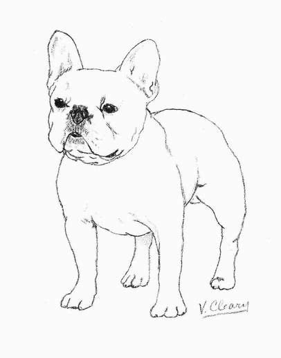 white french bulldog by gingerc on deviantart