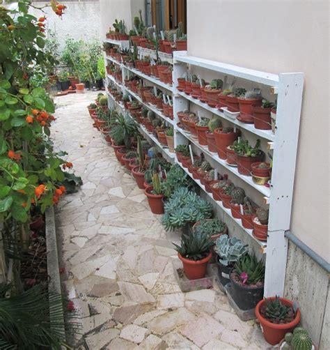 scaffali per piante cactofili forum di cactus e succulente leggi