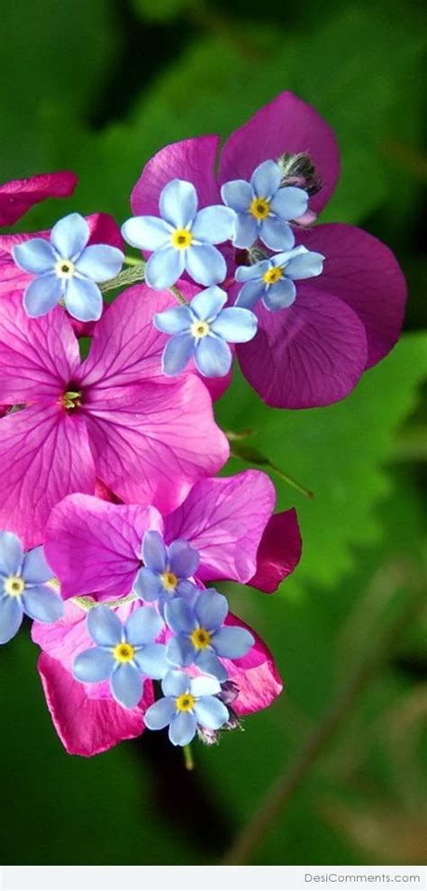 whatsapp wallpaper of flowers beautiful flowers images for whatsapp dp 4k wallpapers