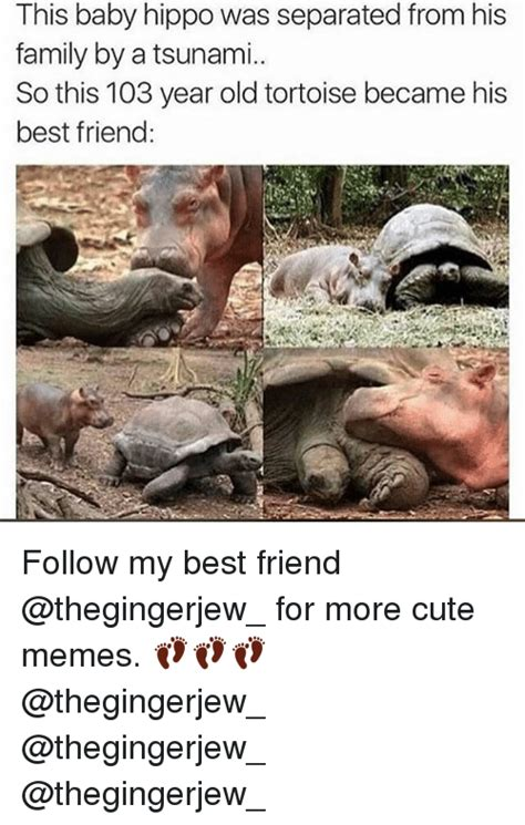 Cute Friend Memes - 25 best memes about baby hippo baby hippo memes