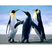 Penguins Habitat Population And Type  Planetanimalzone